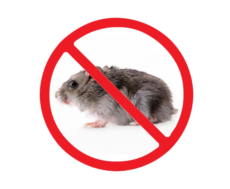 西安灭老鼠服务