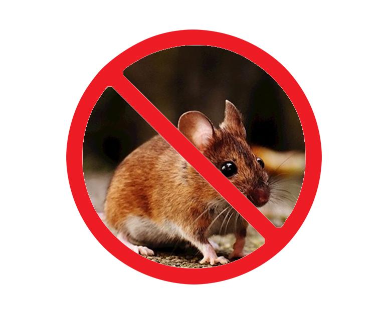 西安上门灭老鼠