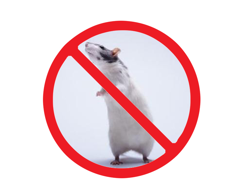 西安快速灭老鼠