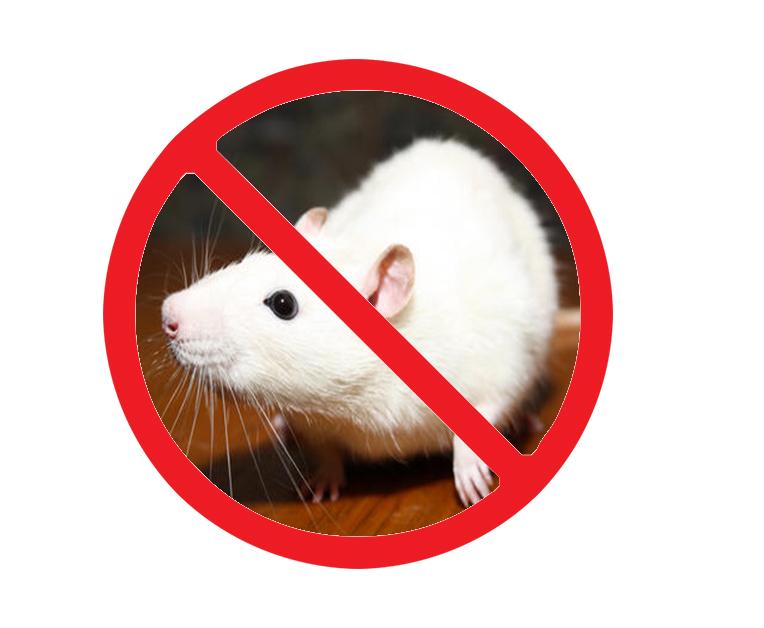 西安仓库灭老鼠