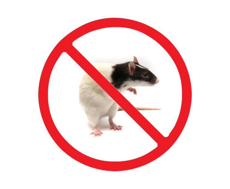 西安家里灭老鼠
