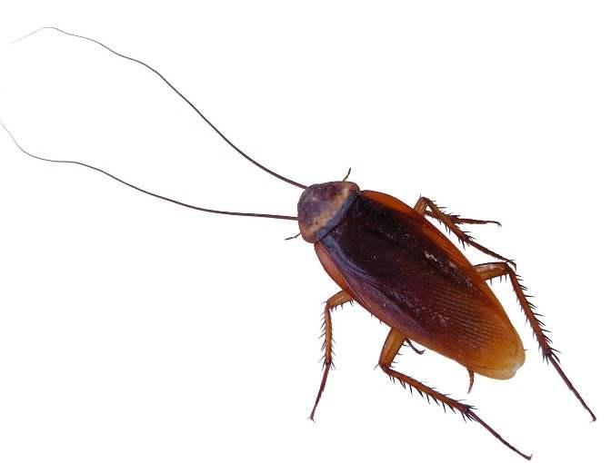 家里灭蟑螂