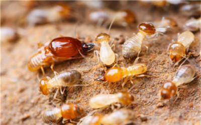 灭白蚁公司