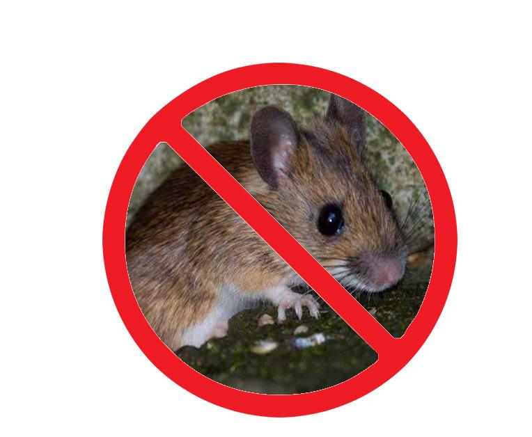 家庭灭老鼠的方法