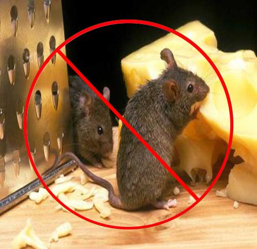 家庭灭老鼠需要注意的事项