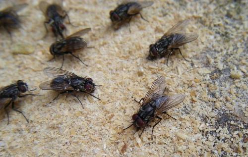 灭蚊蝇公司