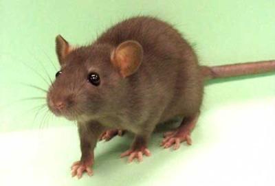 专业灭鼠公司