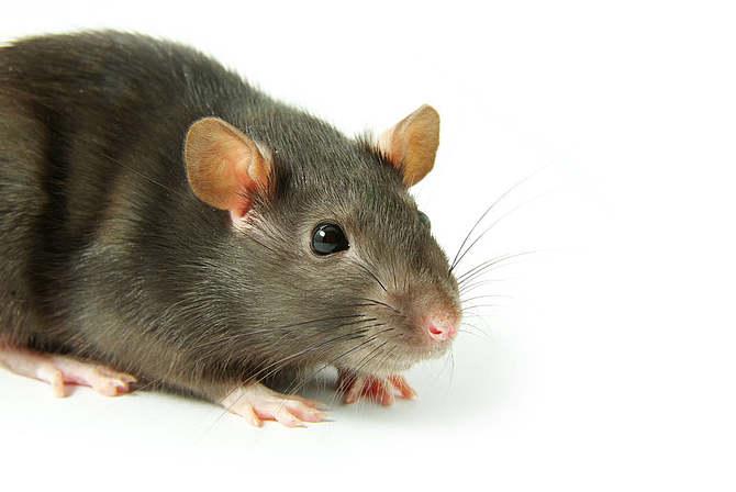 西安灭老鼠公司