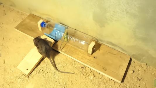 灭老鼠方法