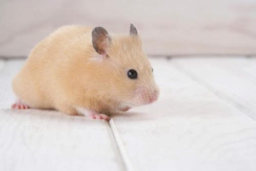 专业灭老鼠公司