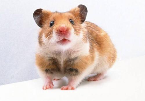 超市灭老鼠