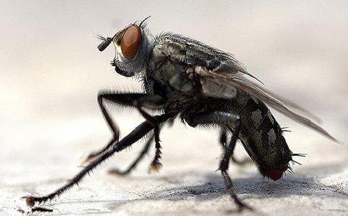 灭苍蝇的方法