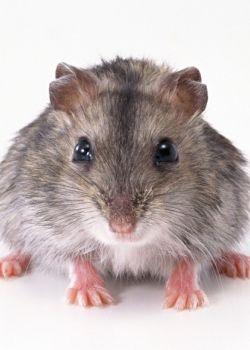 西安灭鼠公司