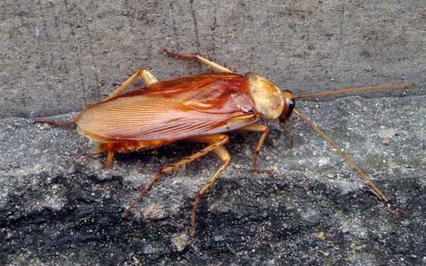 搞好下水道的灭蟑螂工作的措施