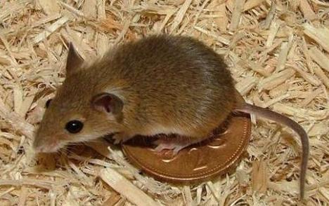 西安灭老鼠公司介绍粘鼠板上应该放的东西