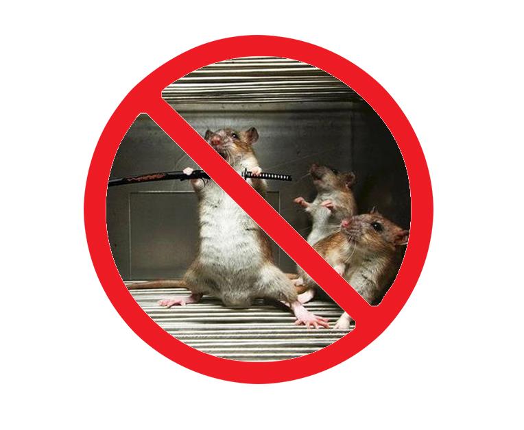 西安家庭灭老鼠