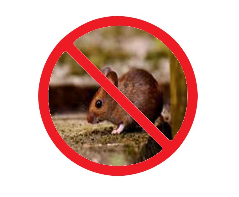 西安酒店灭老鼠