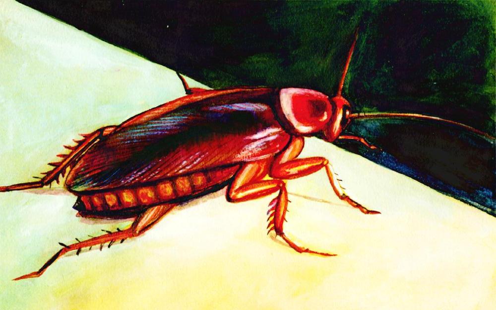 西安灭蟑螂公司介绍:蟑螂一般喜欢待在的地方