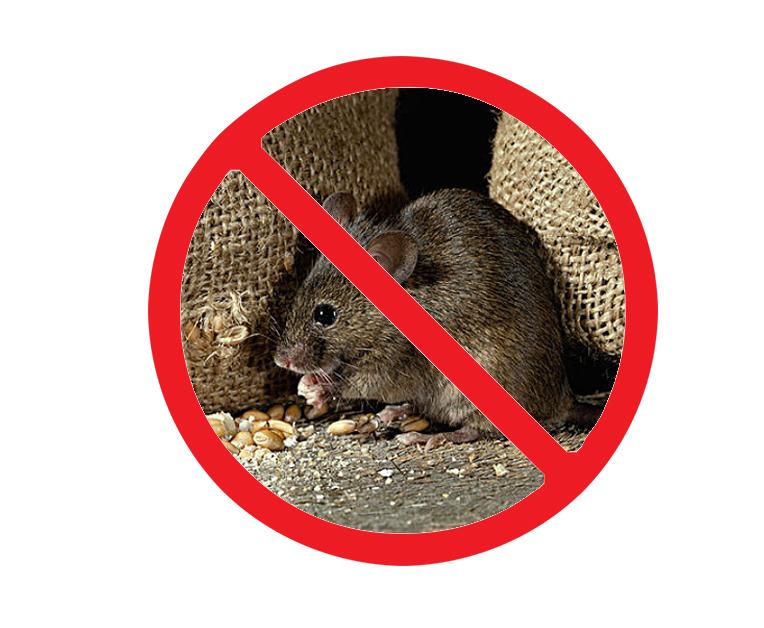 西安雁塔区灭老鼠