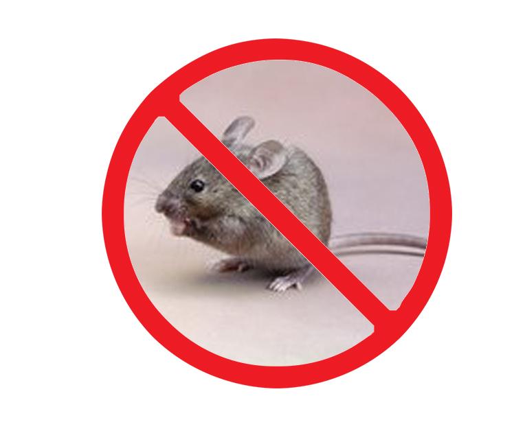 西安北郊灭老鼠
