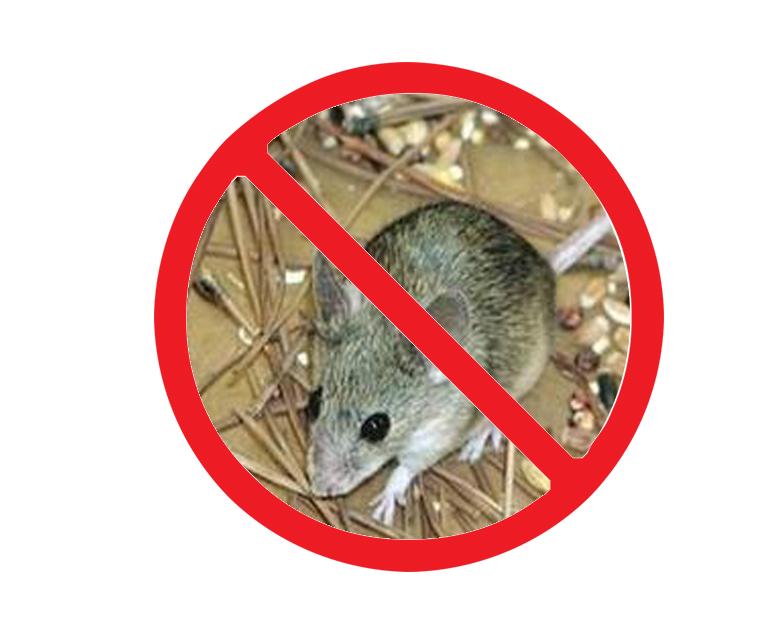 西安城西灭老鼠