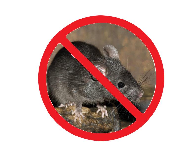 西安西郊灭老鼠