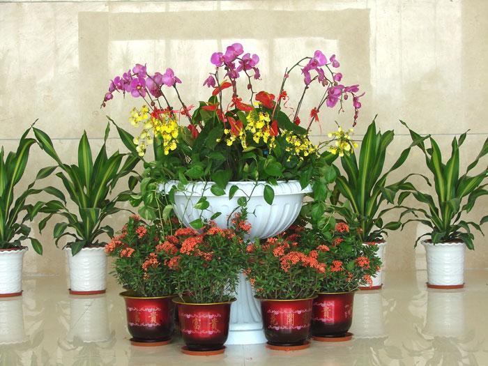 西安花卉養植廠家
