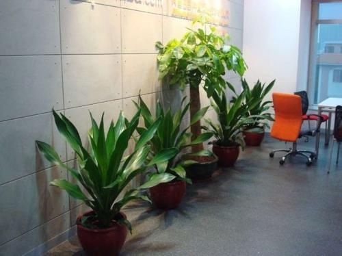 西安酒店花卉租售廠家