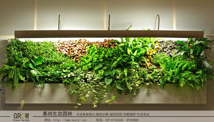 室内植物墙设计与施工
