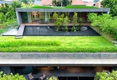 屋顶绿化养护