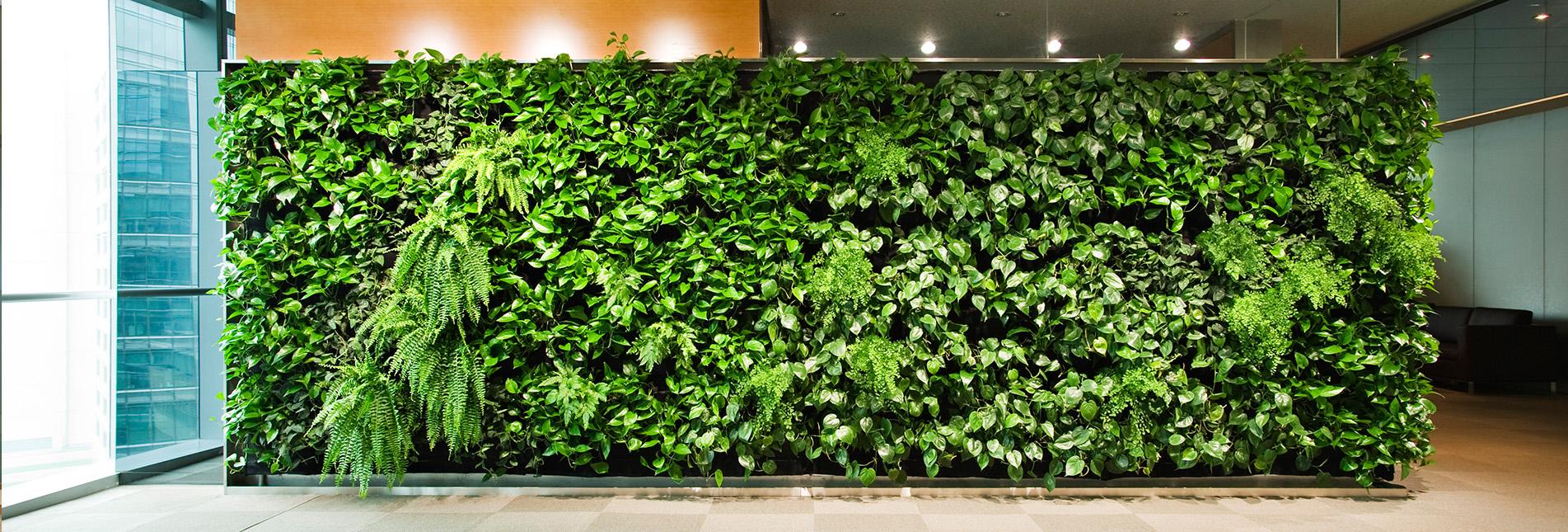 植物墙设计方案应该注意哪些?
