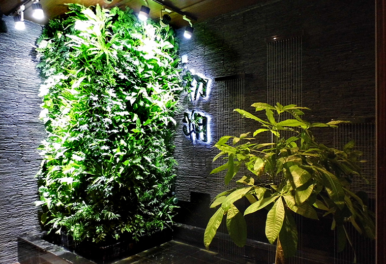 西安曲江茶楼室内植物墙