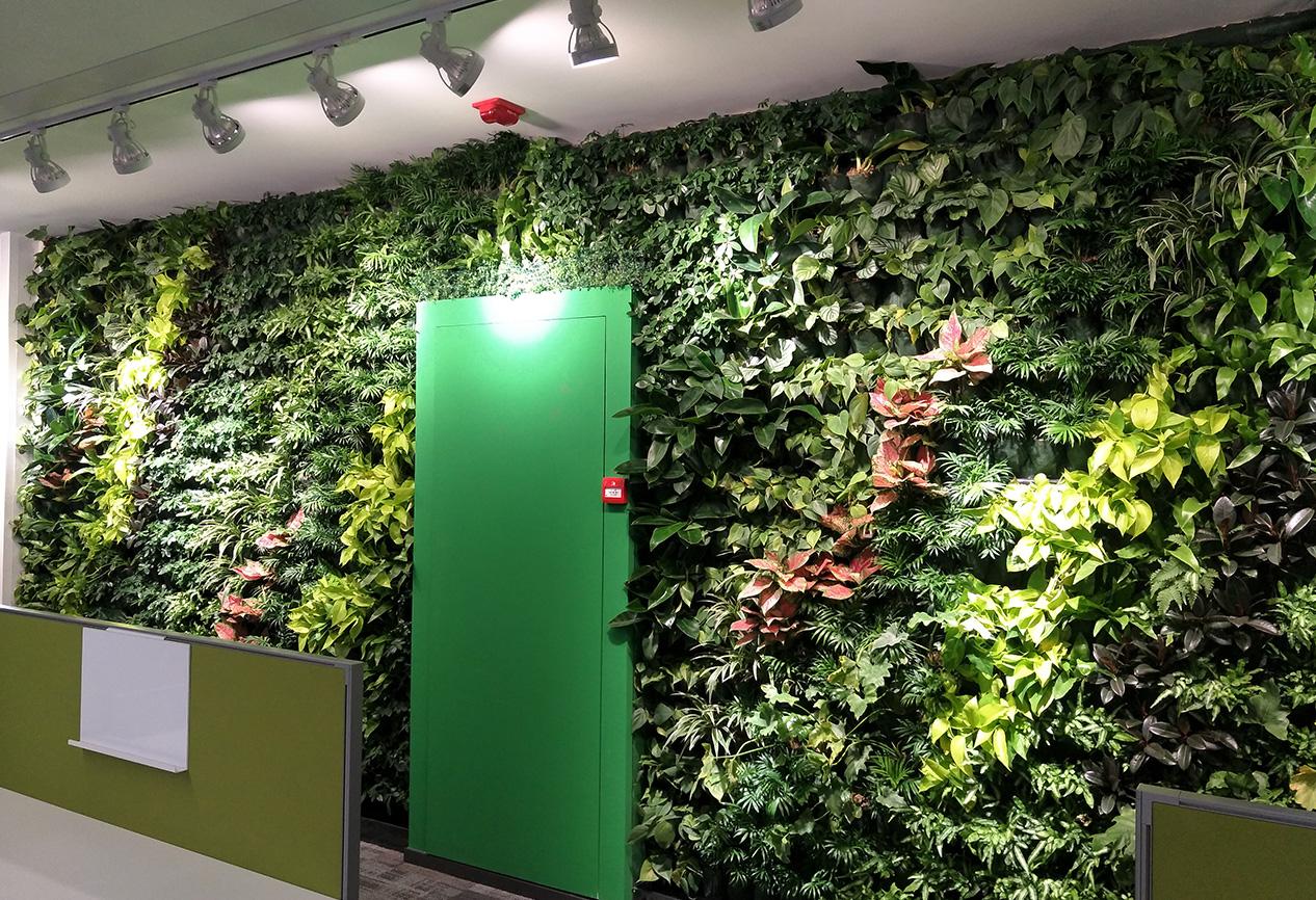 西安华为办公室植物墙