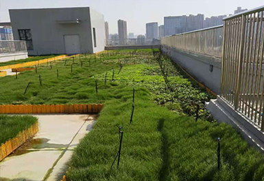 西安高新第三中学屋顶绿化
