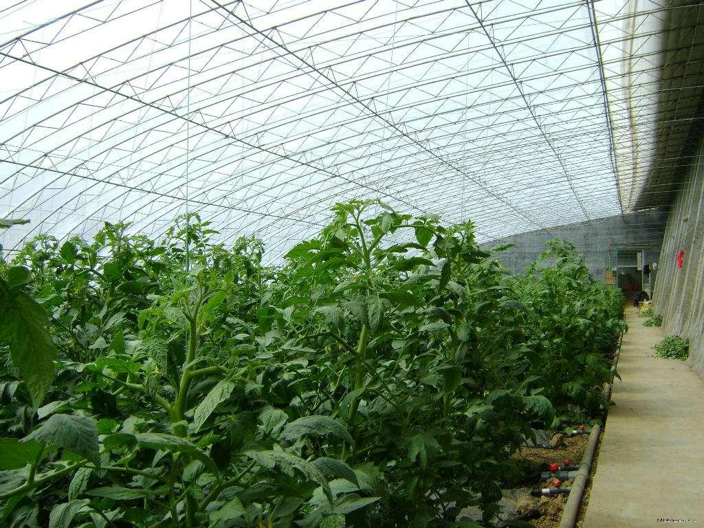 快速选择优质的日光温室大棚阳光板的方法是什么