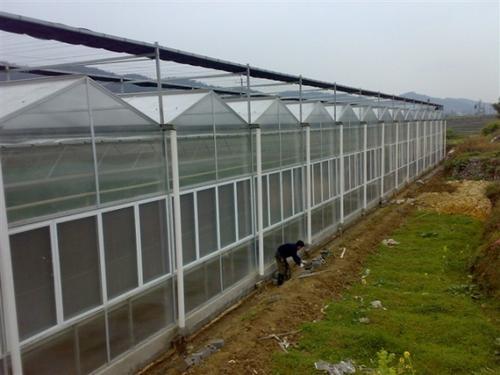 淮南/亳州温室大棚由轻钢结构建筑顶部及四周覆盖玻璃