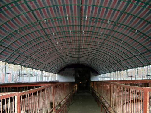阳光板养殖大棚