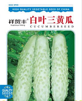 白叶三黄瓜