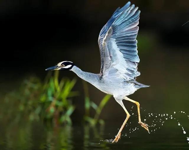 他辞掉高薪去哥斯达黎加雨林拍鸟