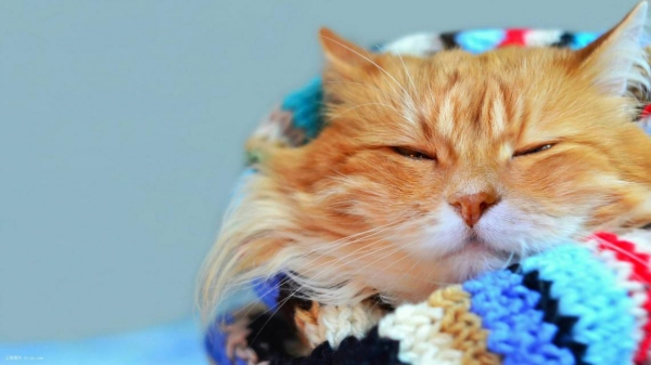 猫咪新年病