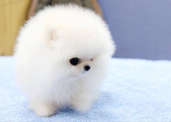 冬天怕冷的狗狗