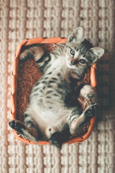 养猫会有哪些糟心事