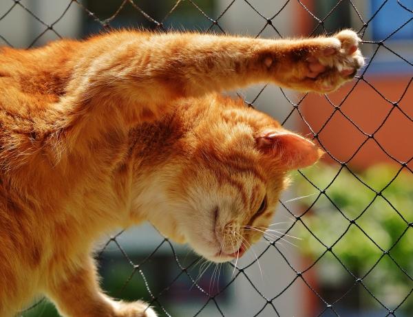 养猫容易犯哪些错误