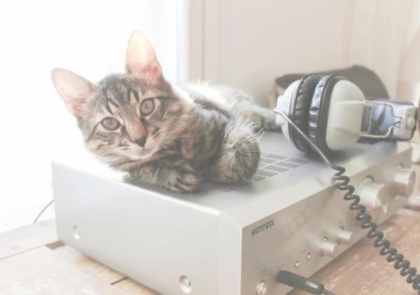 怎样让你的猫陪你更久