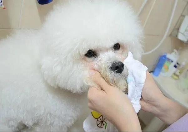 狗狗常见的日常疾病