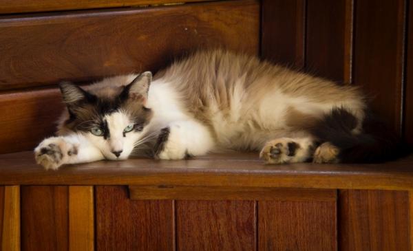 养猫和养狗的区别