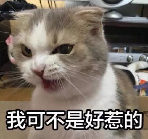 猫猫为什么会乱尿