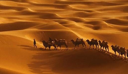 新疆旅游公司穿越西北沙漠走向绿洲