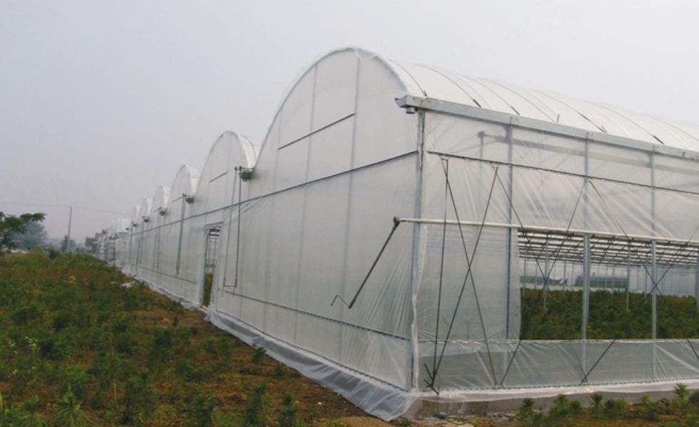 拱形薄膜温室大棚