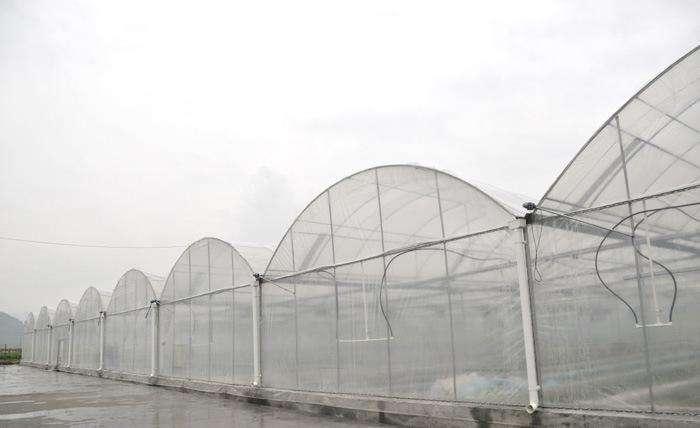 拱形薄膜温室大棚报价